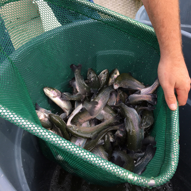Sugar land tx official website for Fish stocking texas