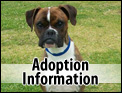 Adoption Information
