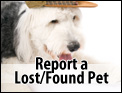 Report Lost or Found Pet