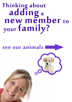 See all of our available animals